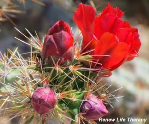Sex Addiction Treatment | Pasadena, CA | Claremont, CA | Renew Life Therapy
